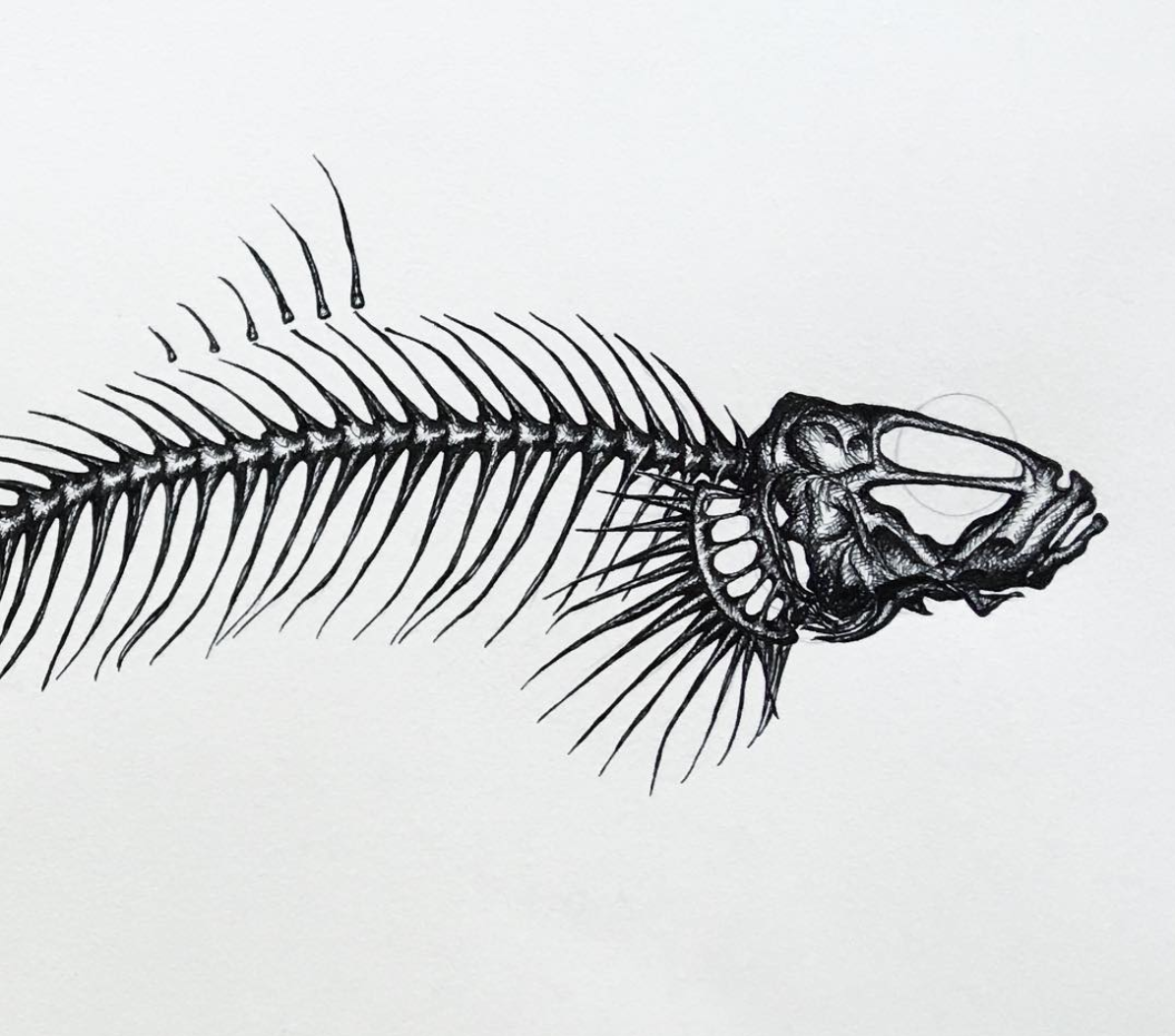 malene kyed goby drawing